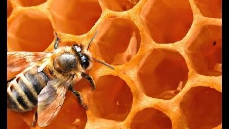 Маска для лица из пчелиного воска