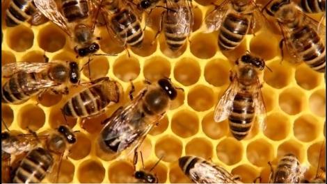 Лечение рассеянного склероза пчелиным ядом (сюжет) 2011