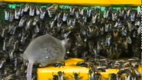 Как устроена пчелиная семья