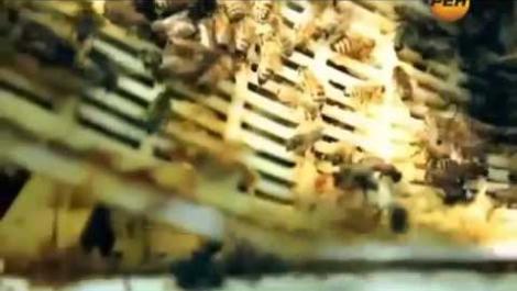 Королевское желе маточное молочко,пчелиный яд, мёд,перга,цветочная пыльца,прополис